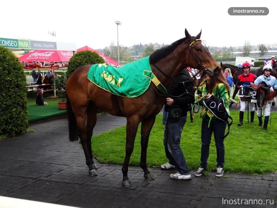 Конь победитель
