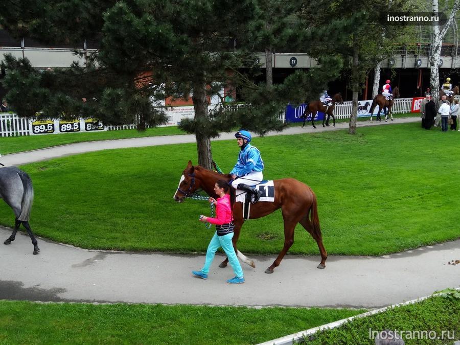 Лошади на ипподроме