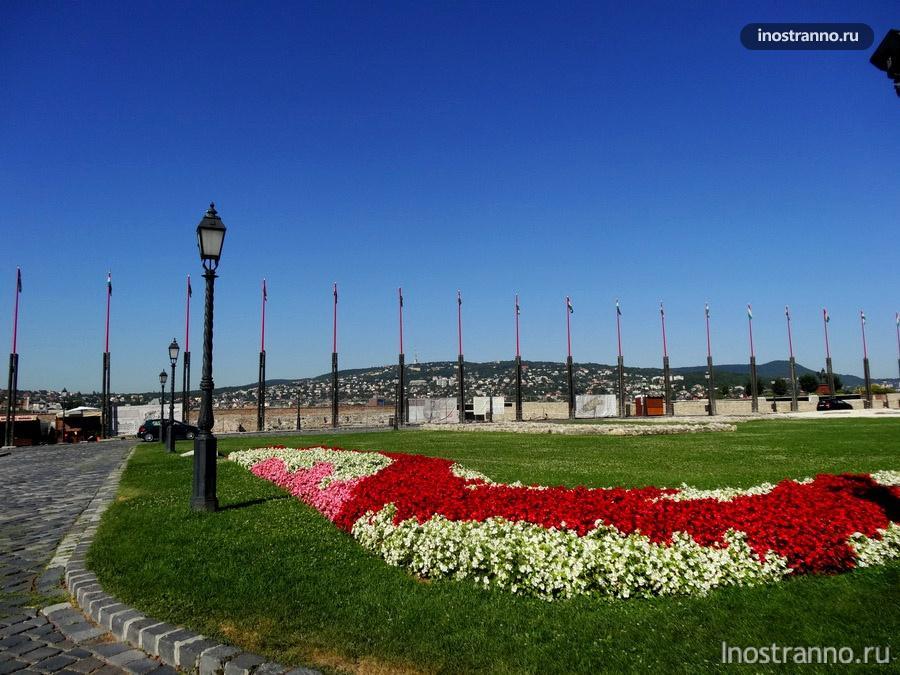 цветы в Будапеште
