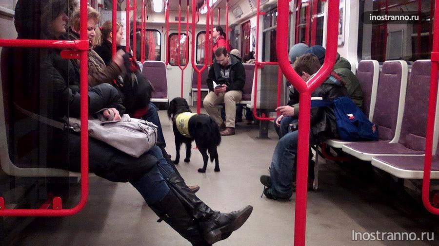 собака в пражском метро