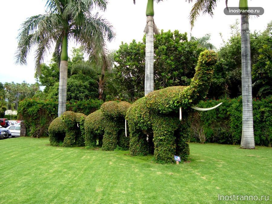 слоны в Лоро парке