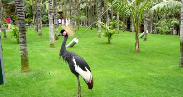 Лоро-парк (Loro Parque)