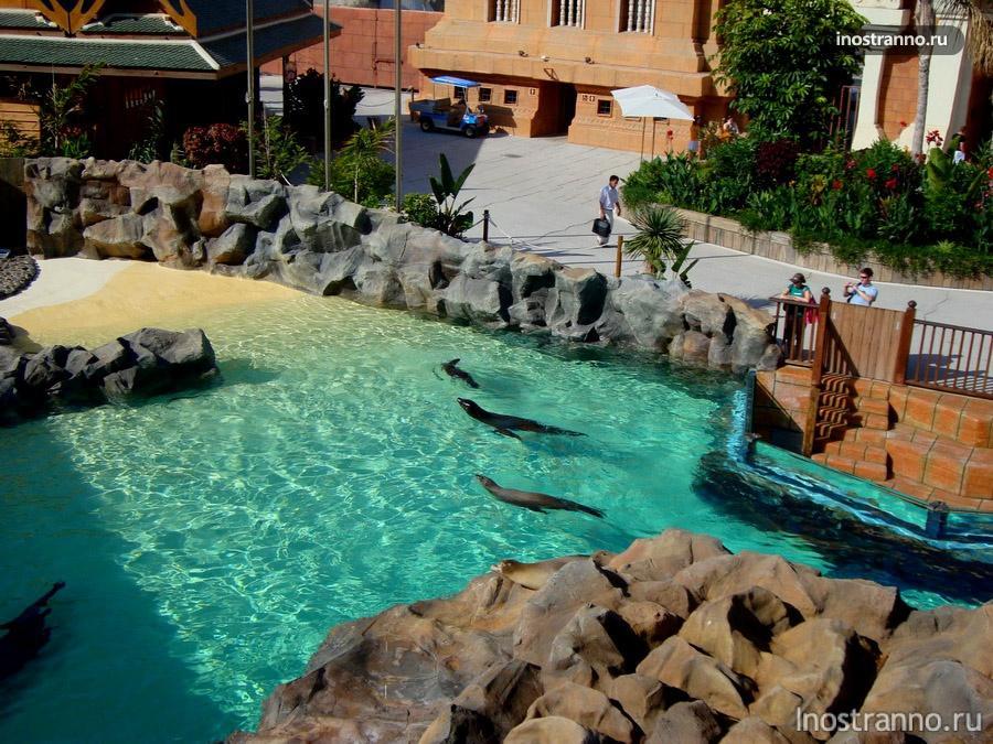 морские львы - сиам парк