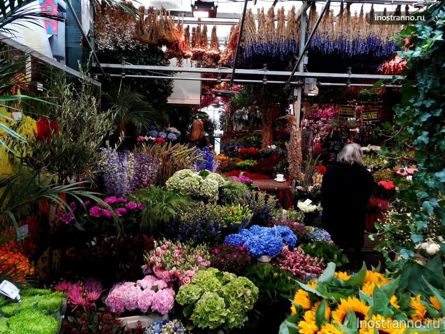 цветы на рынке в Амстердаме