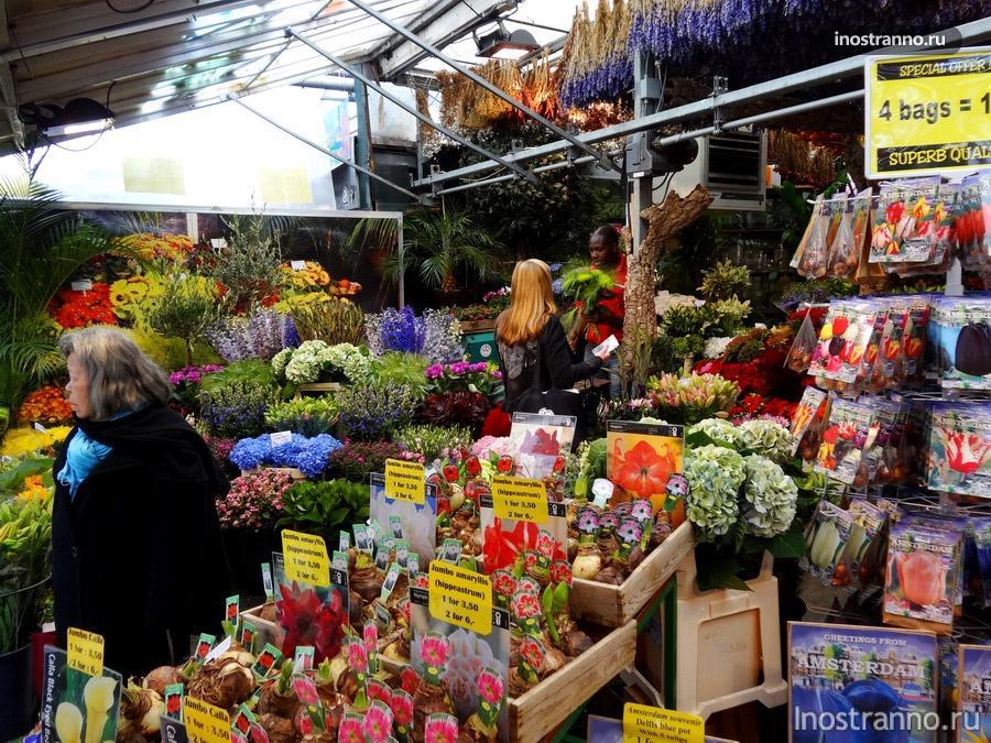 цветочный рынок в Амстердаме