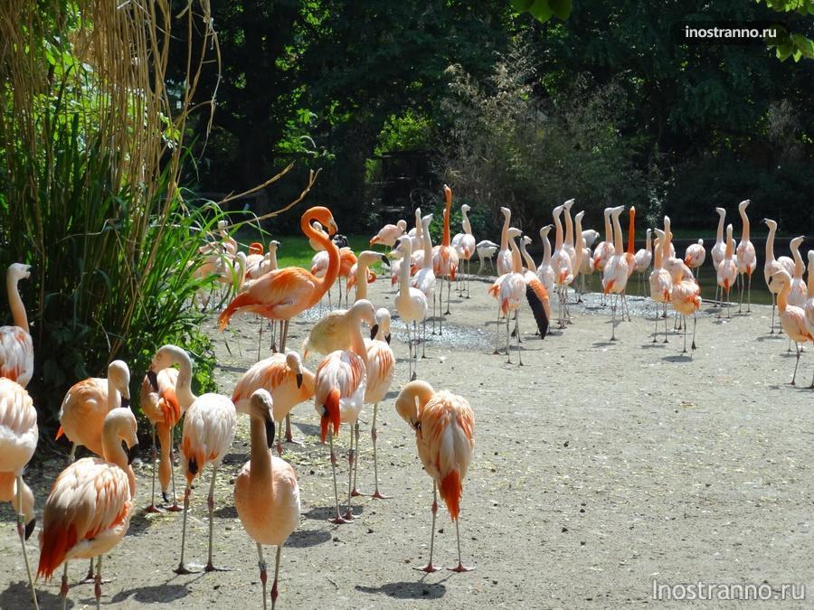 зоопарк в либерце