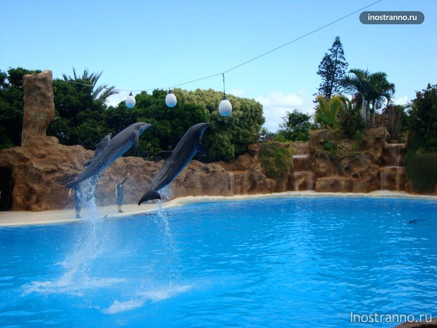 шоу дельфинов на тенерифе