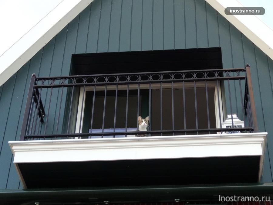 голландский кот