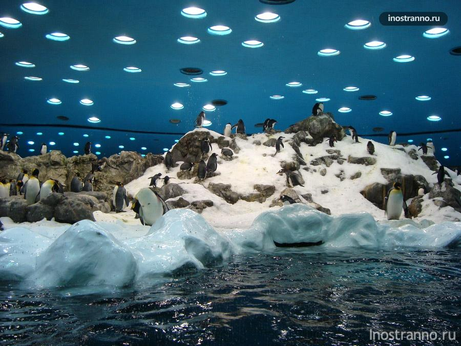 пингвинарий на канарских островах