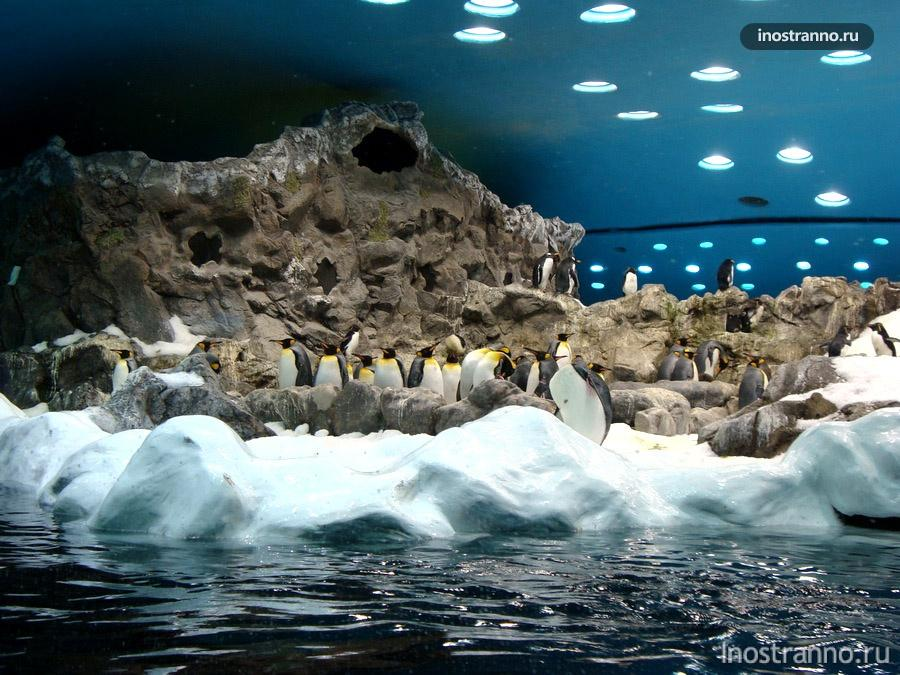 пингвины на тенерифе