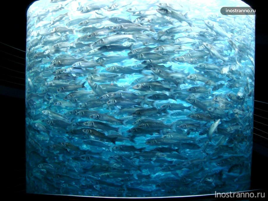 треска в аквариуме
