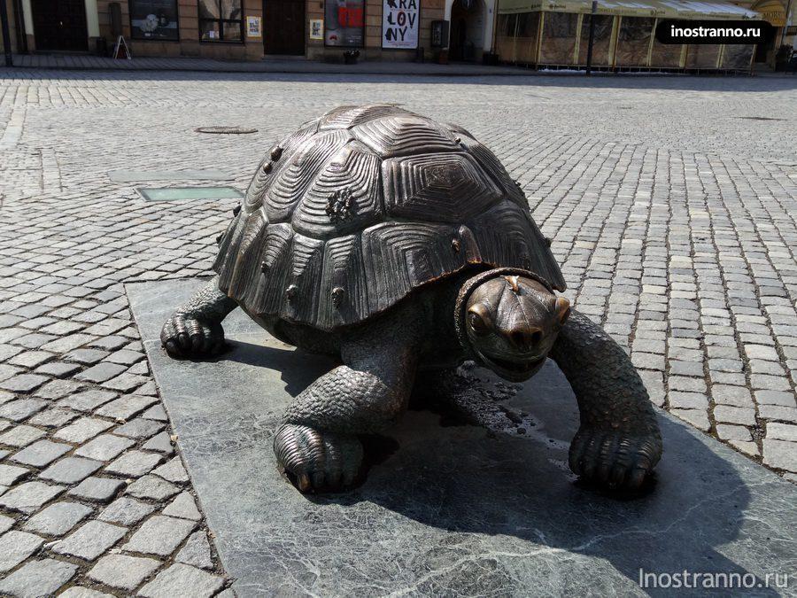 черепаха оломоуц