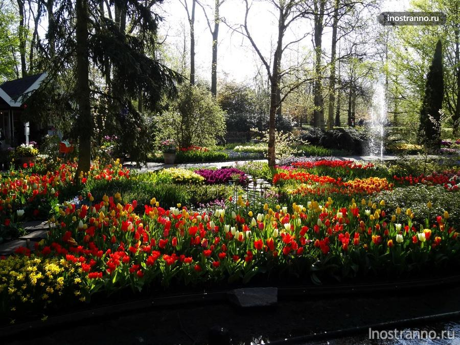 сад тюльпанов кекенхоф