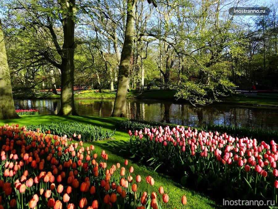 тюльпаны в саду Кёкенхоф