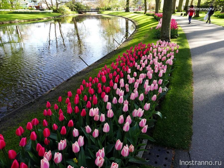 канал и поле тюльпанов