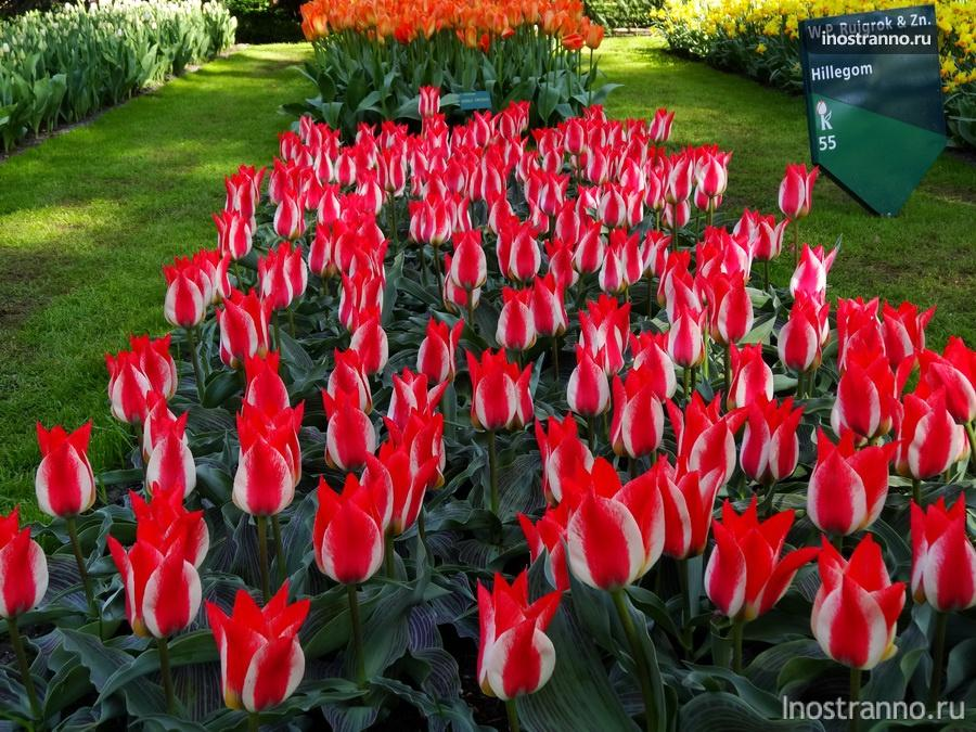 парк тюльпанов кёкенхоф