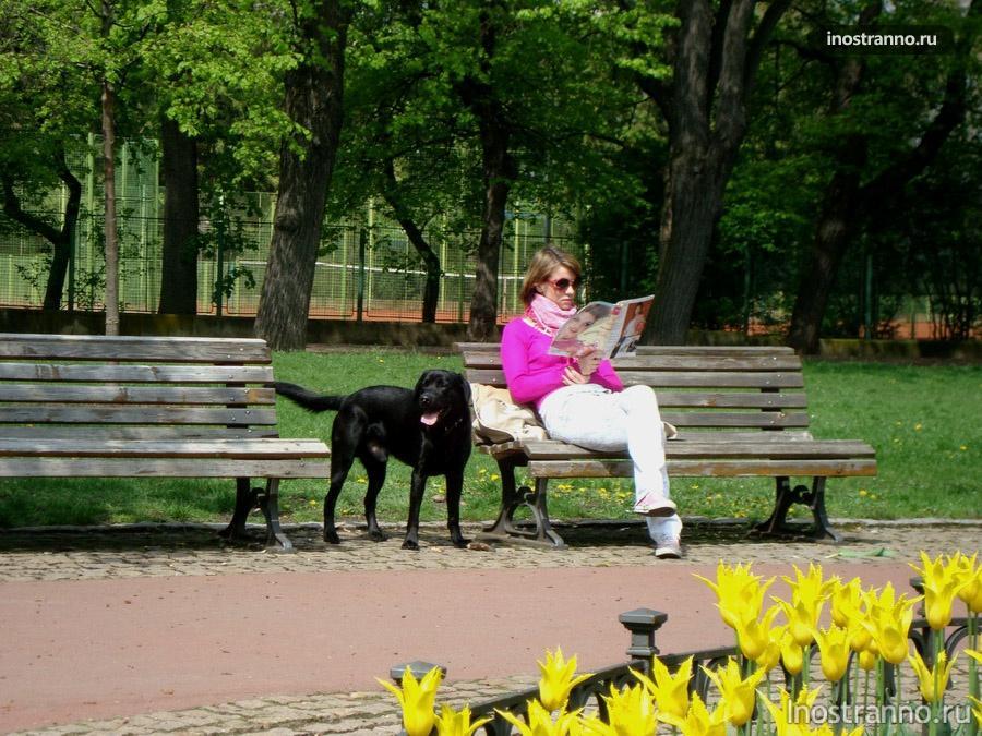 Добрая собачка в пражском парке