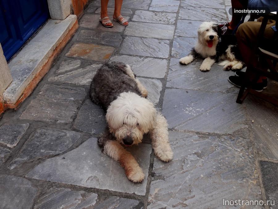 собака на Санторини