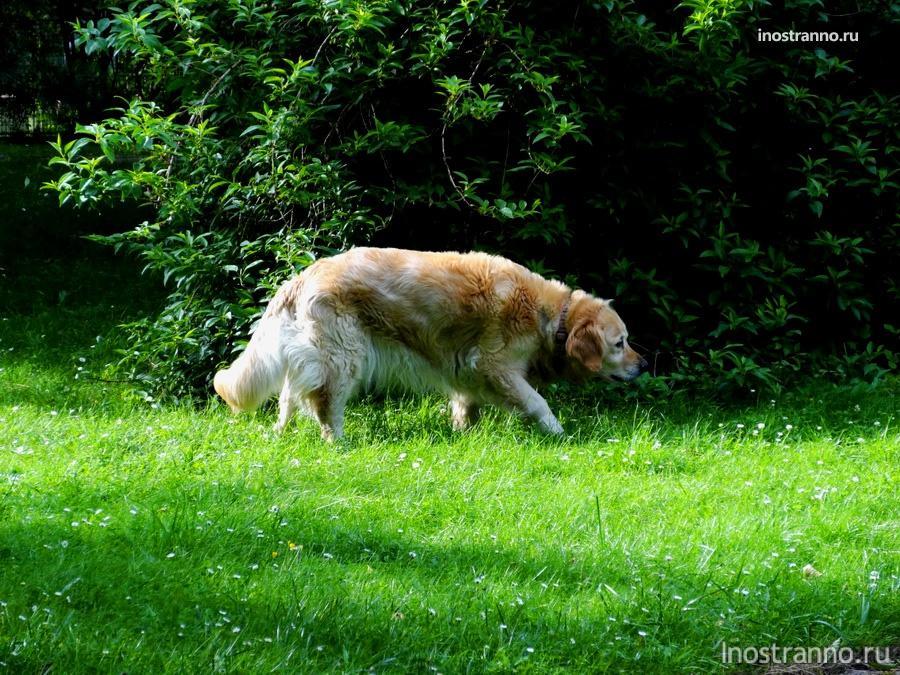 пес в пражском парке