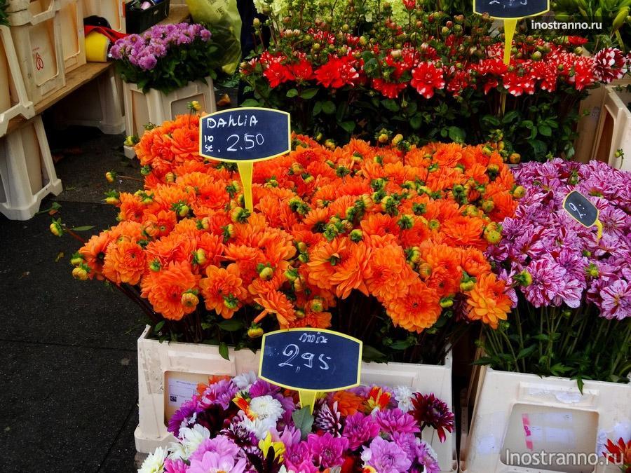 герберы на рынке в Амстердаме