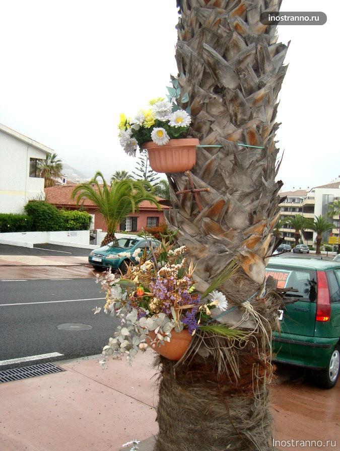 цветы на канарах