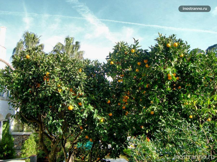 лимоны и Лимончелло