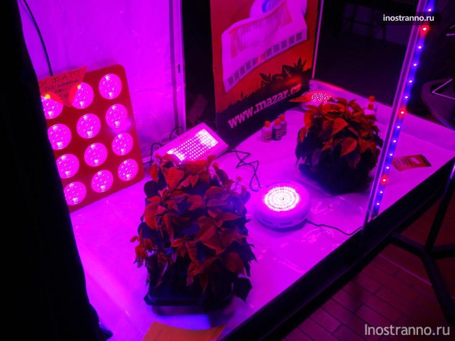 лампы для выращивания конопли