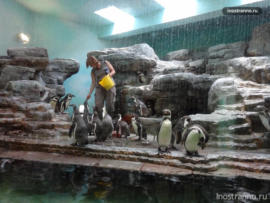 Пражский зоопарк - пингвины