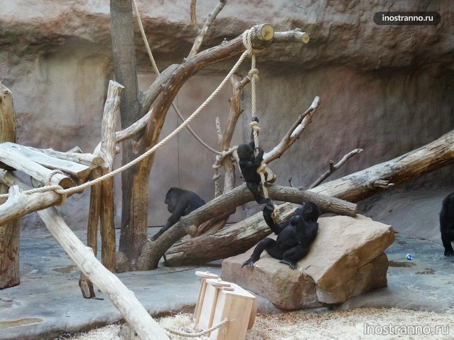 Пражский зоопарк - павильон горилл