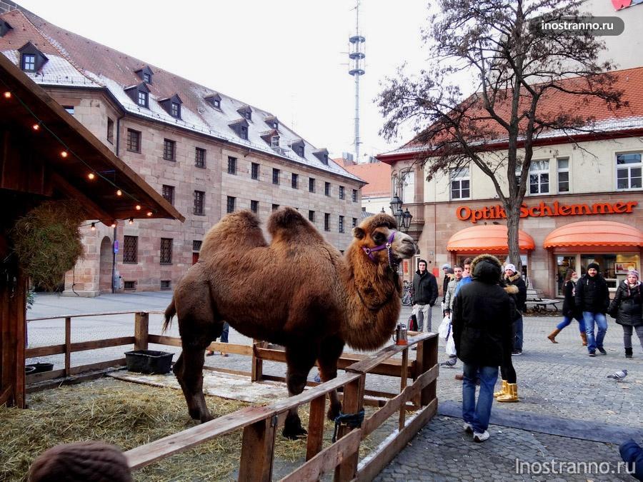 животные на рынке в нюрнберге