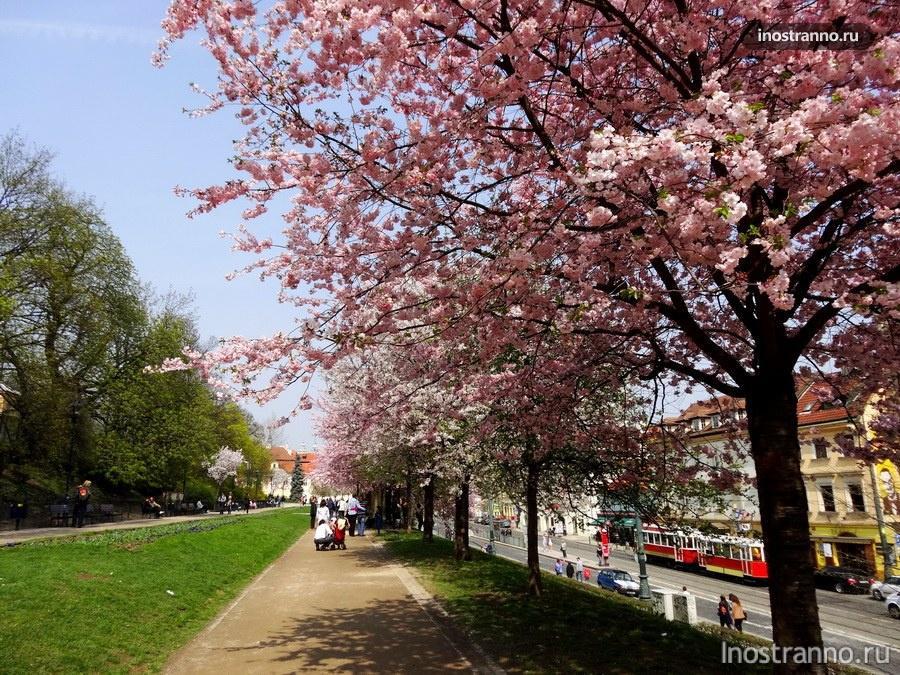весна на холме Петржин в Праге