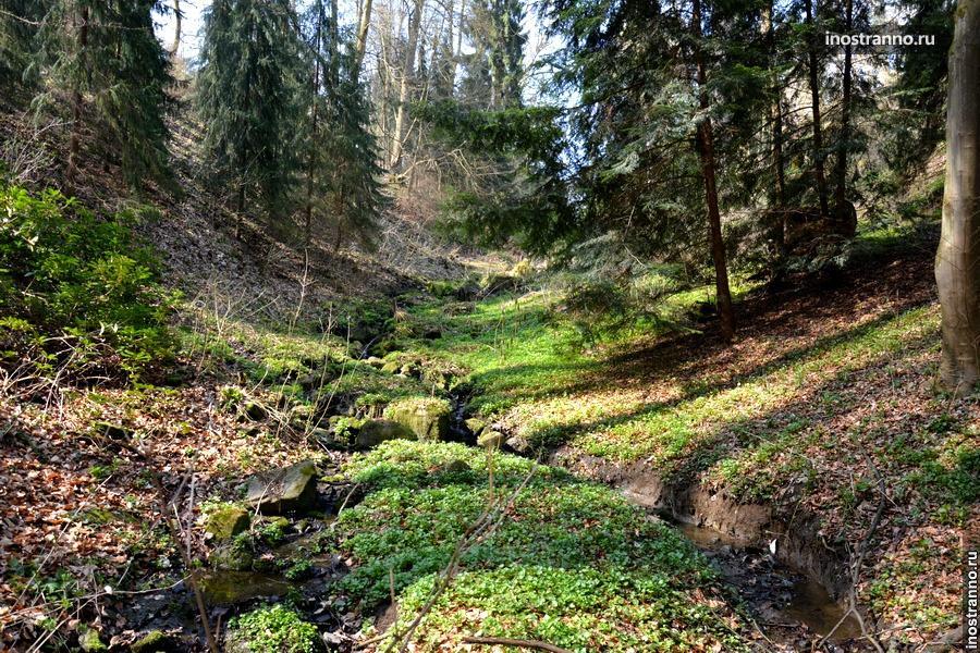 Лес в Чехии