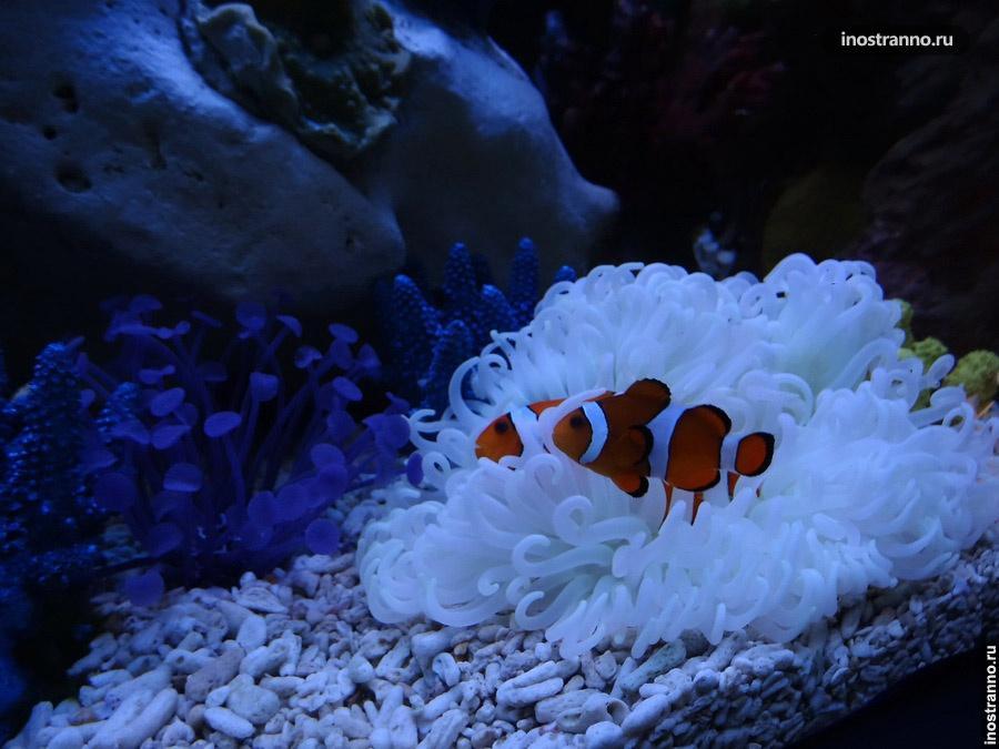 аквариум в Праге