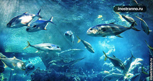 Храм моря – Океанографический музей Монако