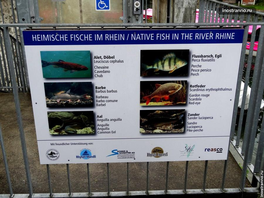 Рыбалка в Европе на Рейне