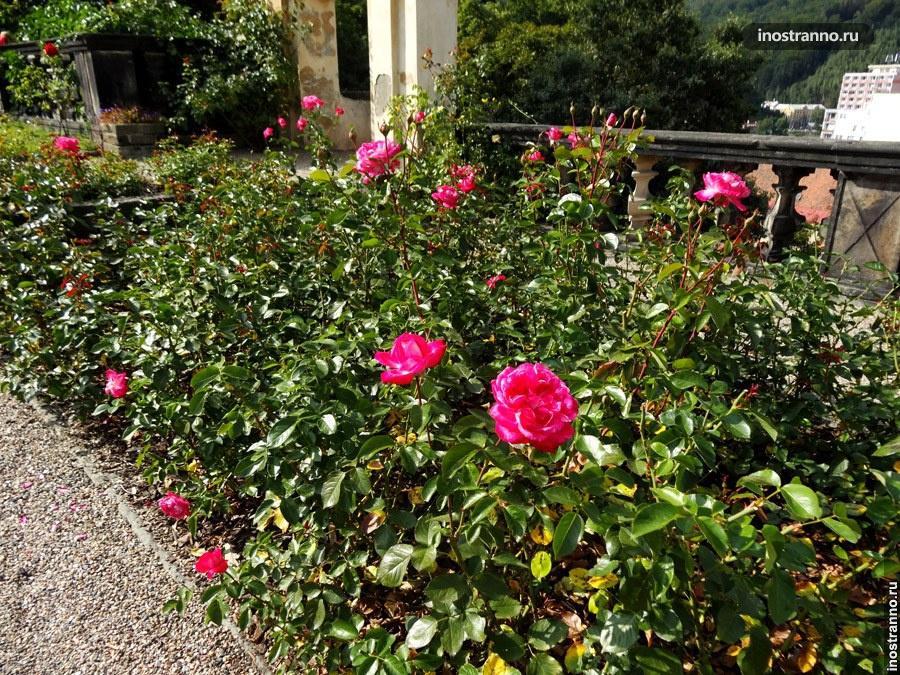 розовый сад в берне