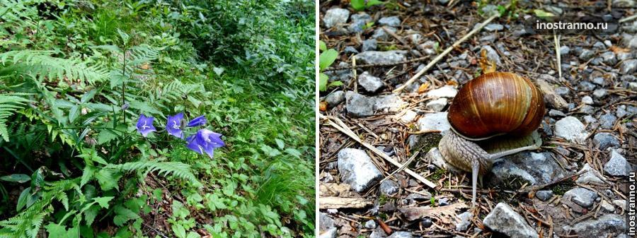 флора и фауна в словацком рае