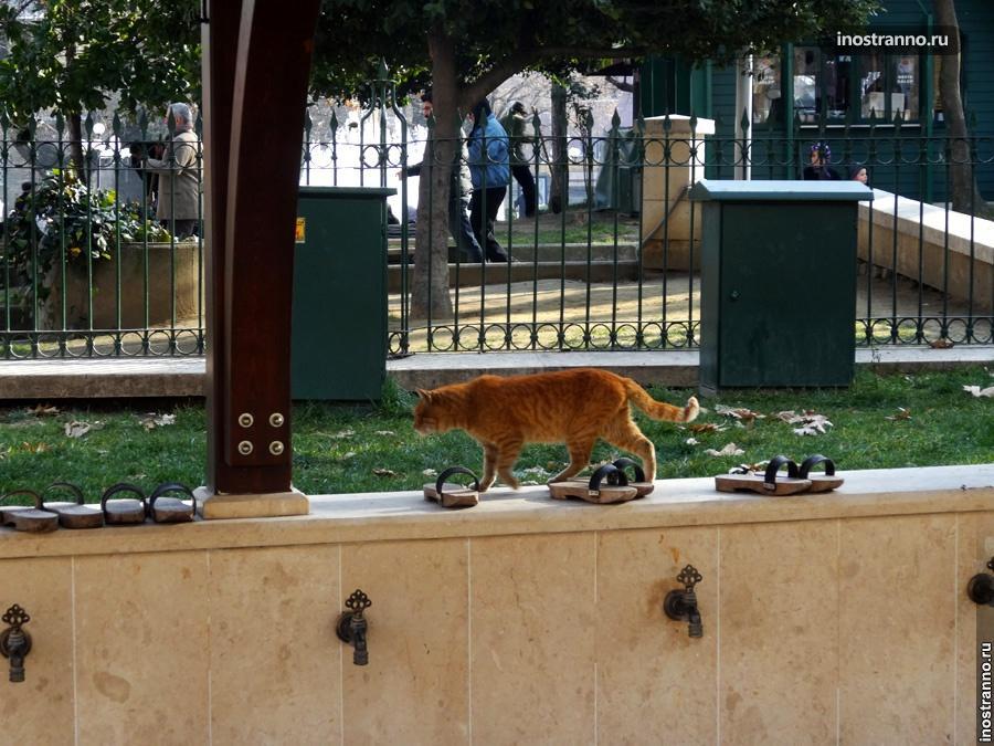 Рыжий кот у мечети