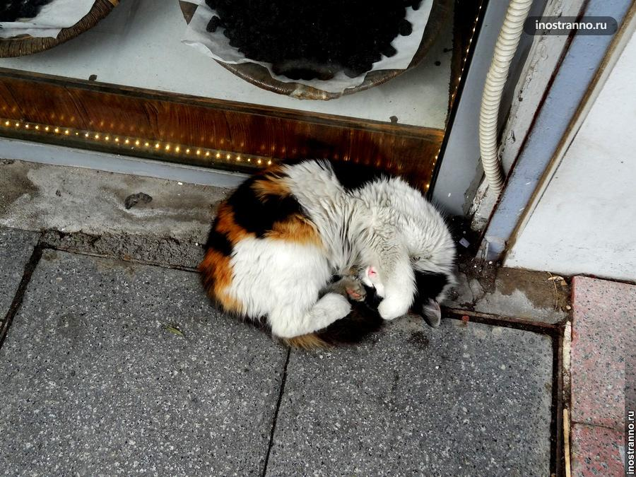 Беспризорный кот в Стамбуле