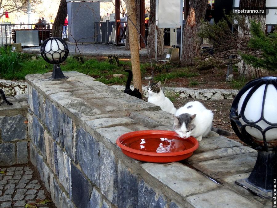 Кормление кошачьих в Турции