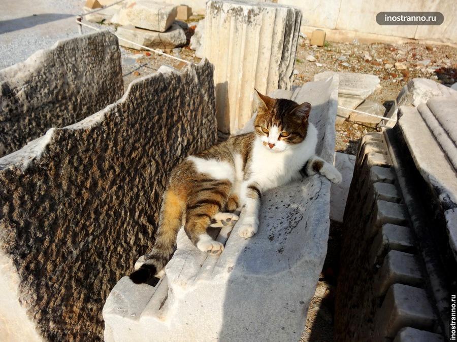 Милый котик в Турции