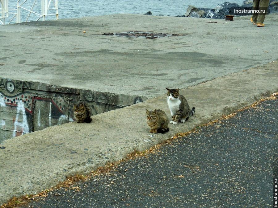 Набережная Кеннеди и коты