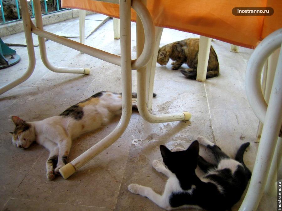 Коты в Памуккале