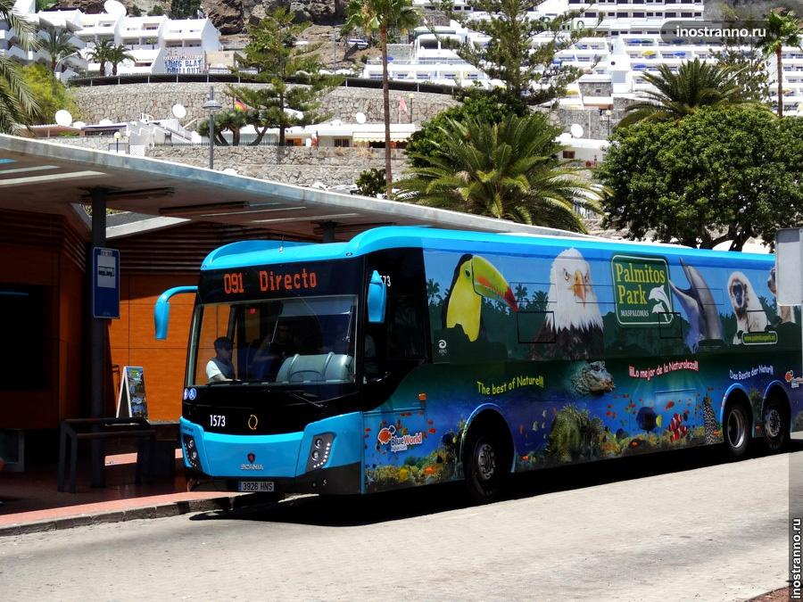 Автобусы на канарах