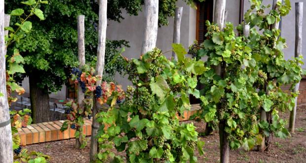 Праздник молодого вина Vinobraní
