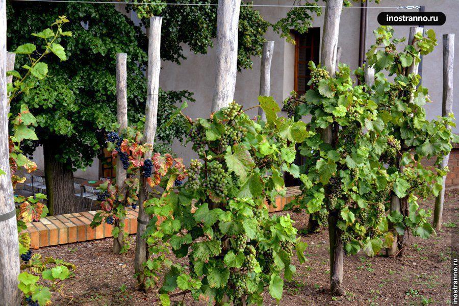 вино чехии