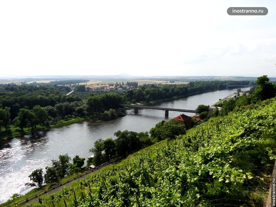 Вино и виноградники в Мельнике Чехия