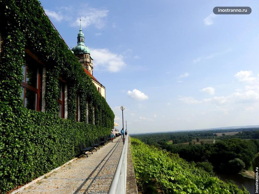 Чешский виноградник в Мельнике