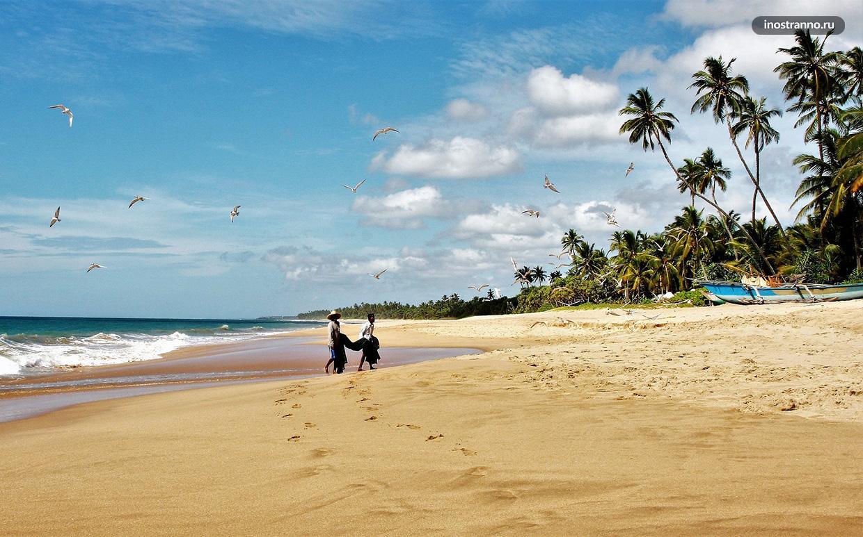 Шри Ланка когда лучше отдыхать