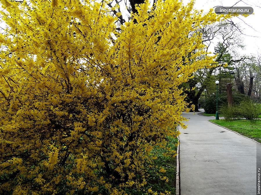 Весна пришла в Прагу